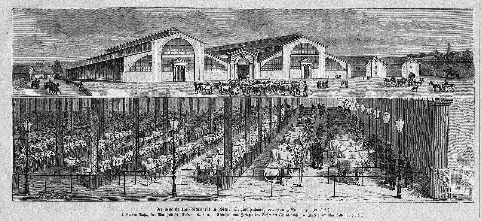 Historische-Postkarte-Rinderhalle